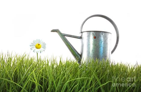 old-watering-can-in-grass-with-white-sandra-cunningham